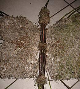 Natuurvlinder