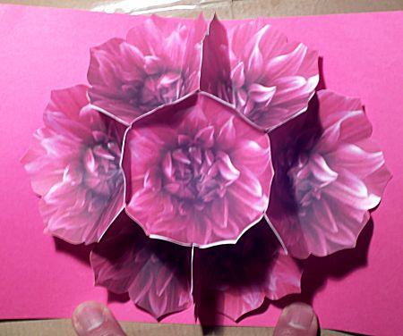 Zeven bloemen pop-up kaart
