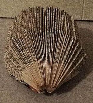 Egel vouwen uit boek